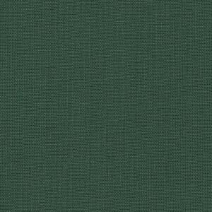 Iris - evergreen