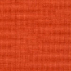 Iris - orange